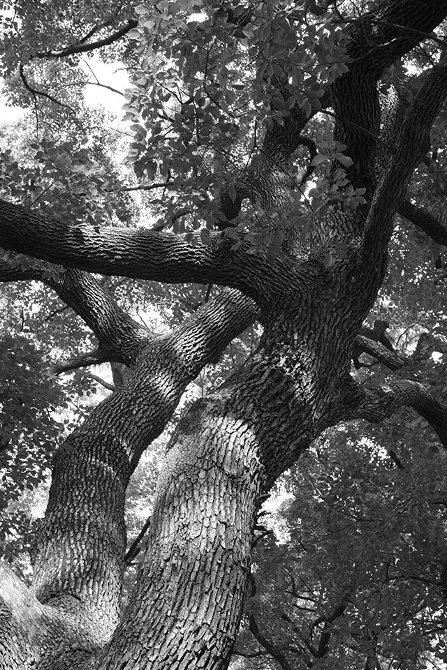 最後に木登りしたのはいつだったか思い出せないでいる。